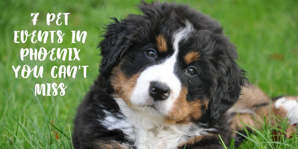 If you are looking for Phoenix pet events you are in luck! We've got a collection of awesome events that are all about pets here in Phoenix. Phoenix living is all about finding your passions and if your passion happens to be pets, you've chosen a great place to call home.