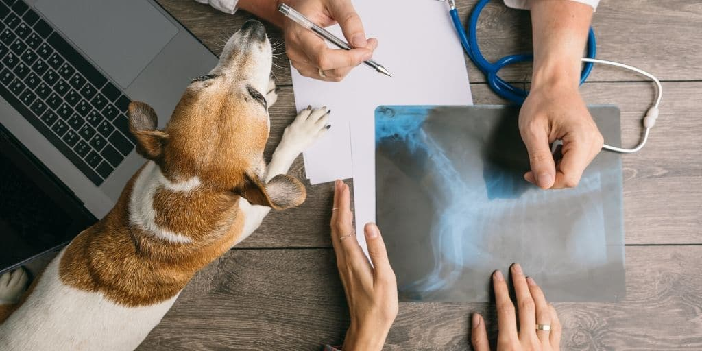 Vet care costs in Phoenix and other places can be pricey depending on what is going on with your pet. Before you bring a new pet home, or before you head into a costly vet procedure it's important to know these tips and tricks for keeping your costs low!